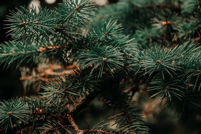 Živý, či umelý? Kapor alebo filé? Aké budú naše Vianoce?