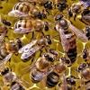 Farmársky klub: Včely na strechách...