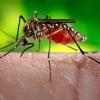 Čo vieme o víruse ZIKA